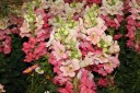 2009 Garden Show - Flowers